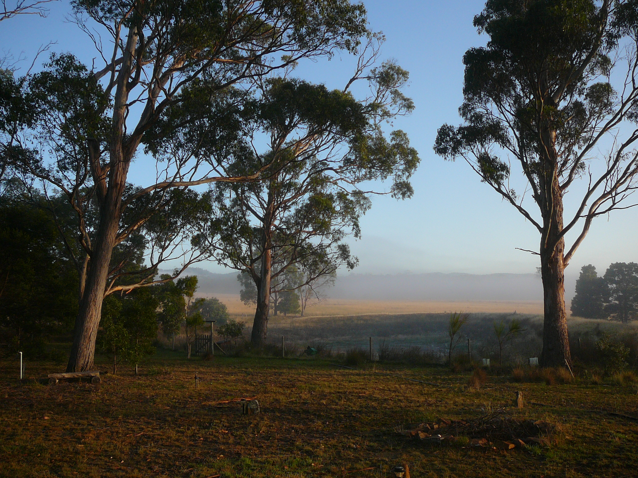 9 Sunrise trees Wind Song BnB Little Swanport Tasmania
